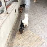 Hotel para Animal onde encontrar 90342 Vila Gustavo